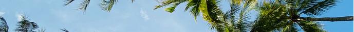 palm-tree-crop.png